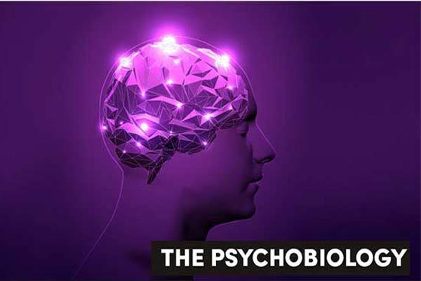 Volume Otak