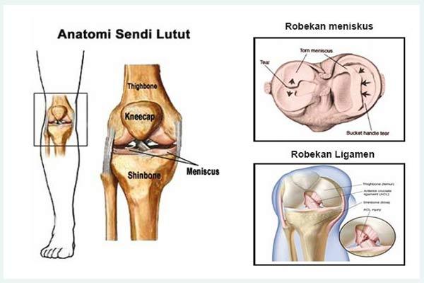 Anatomi Sendi Lutut