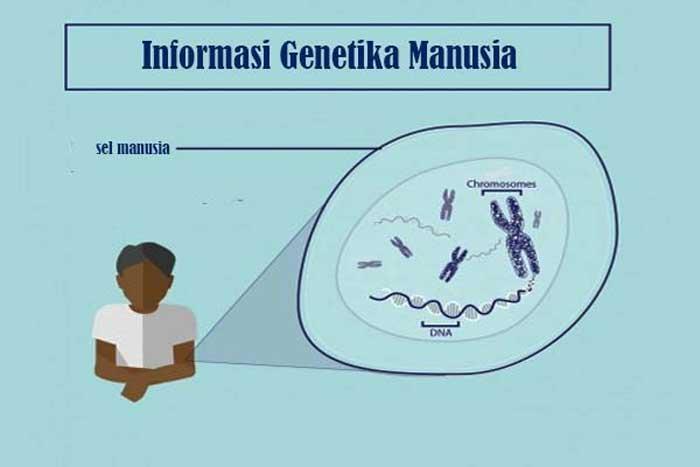 Informasi Genetika Manusia